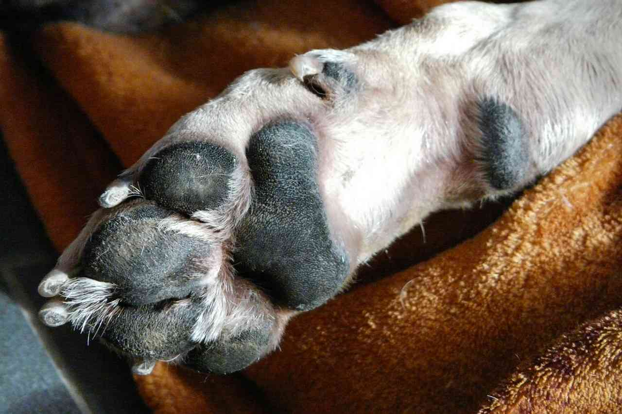 Hot To Trim Dog Nails